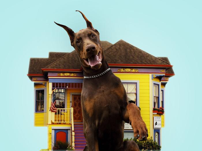 10 лучших пород собак для охраны дома