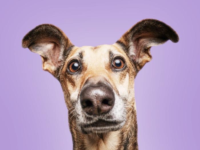 9 вещей, которые сокращают жизнь собаки
