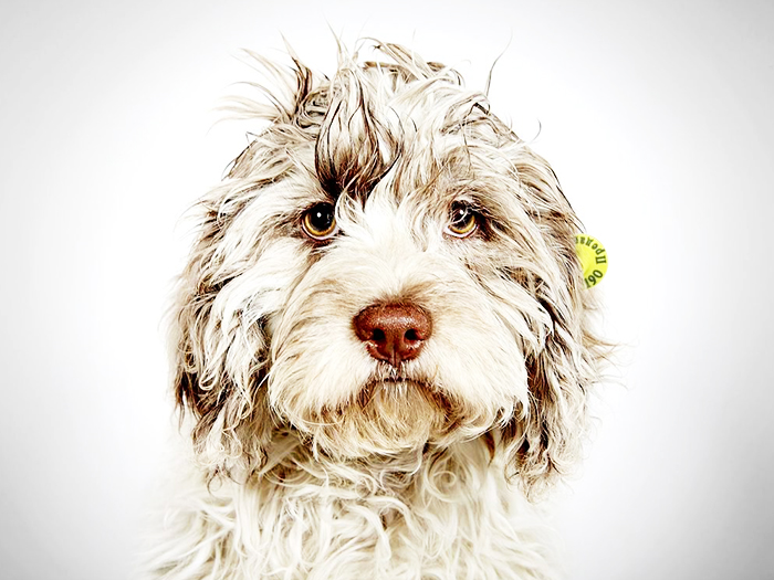 7 советов от кинолога, помогающие уберечься от стаи бродячих собак