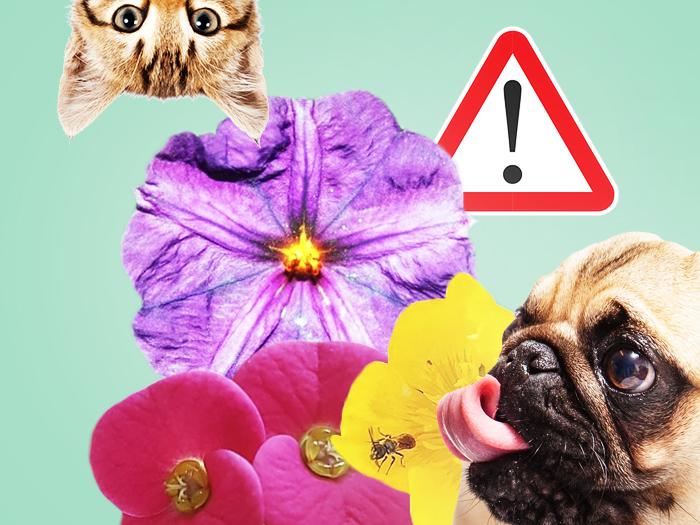 25 самых опасных растений для домашних животных