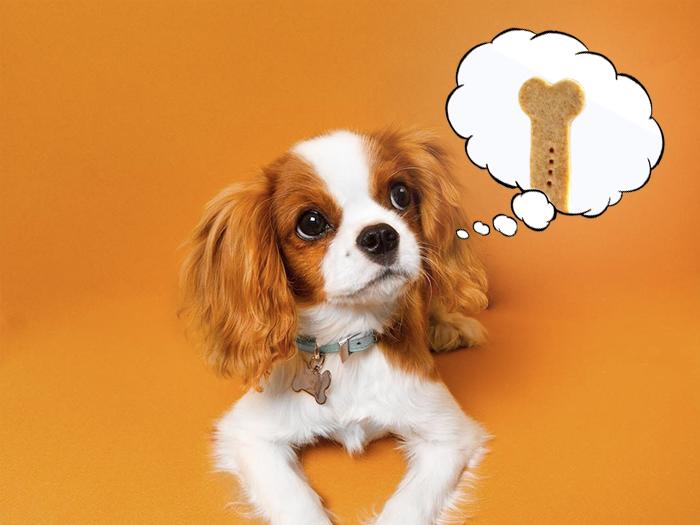 25 простых лакомств для собак, сделанных с 5 ингредиентов или менее